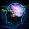 Brainie Consciousness And Development